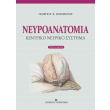 neyroanatomia kentriko neyriko systima photo