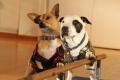 beverly hills chihuahua 3 dvd extra photo 3