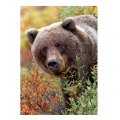 trefl puzzle 1000pz nature grizzly bear extra photo 1