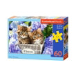 pazl castorland cute kittens 60tmx photo